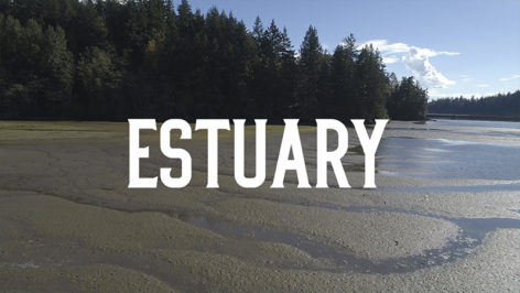 Estuary Bellingham